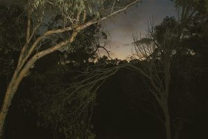 a photo of Dawn at Toodyay